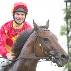 horse-malaguerra