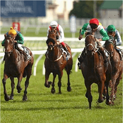 peters-investments-kingston-town-classic-winner