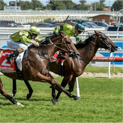 Oakleigh Plate Betting Websites - image 2